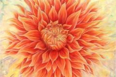 orangedahlie01
